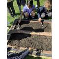 Preparing the soil ready for planting