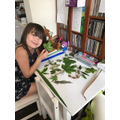 Ivy has collected leaves for her science project.