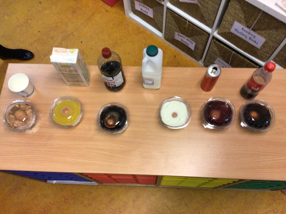 An experiment to find out the effects of different drinks on enamel (similar to eggshells)