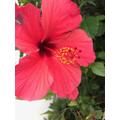 Jayne's red flower