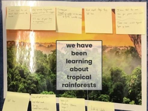 PBL- Tropical Rainforests