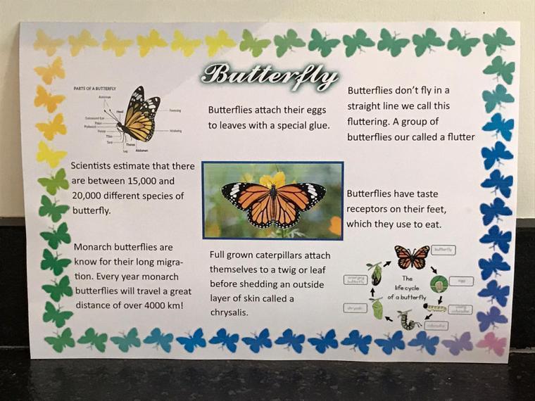 Fantastic Butterfly Factfile by Julia