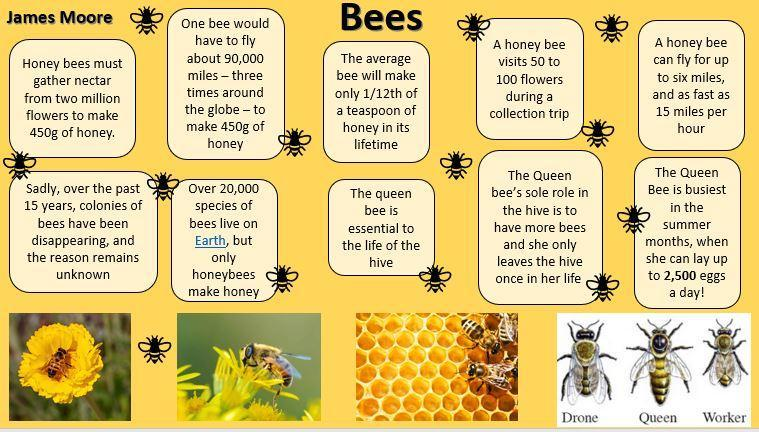 Brilliant Bee Facts by James Moore