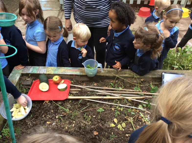 Tasting our produce.