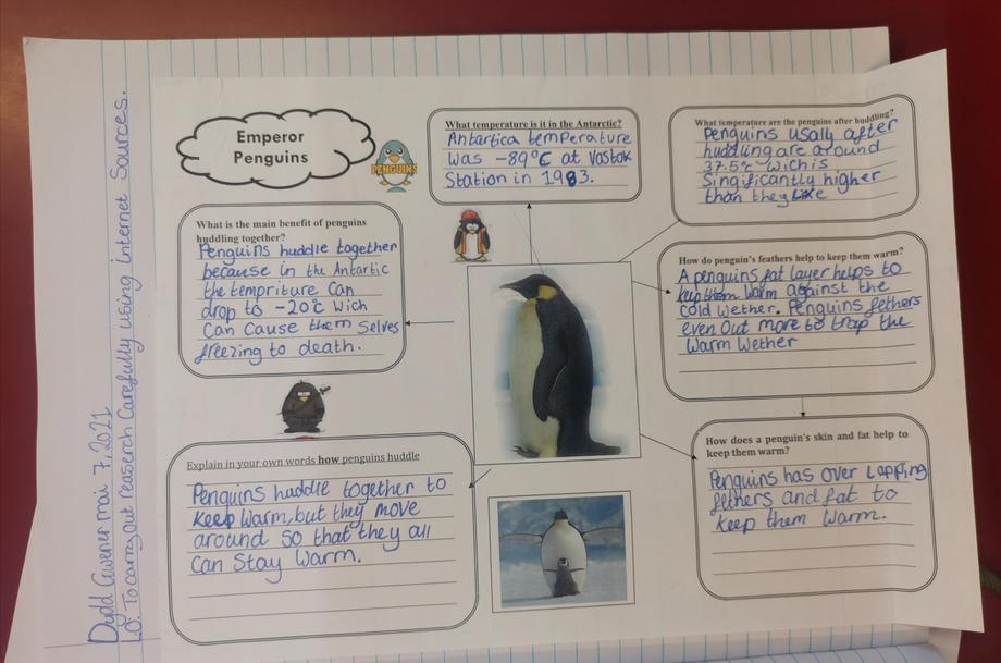 Research about penguins
