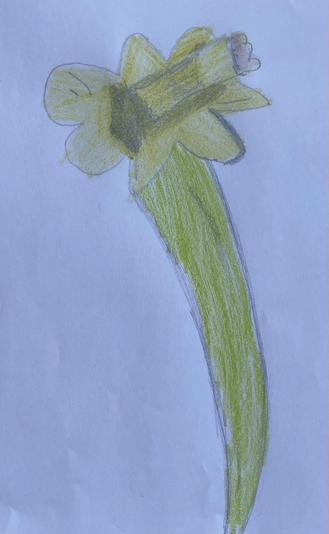 Martha's daffodil