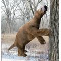 Giant ground-sloth.
