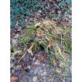 A hedgehog Nest.