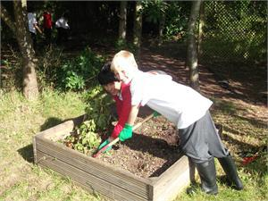 Weeding the allotments