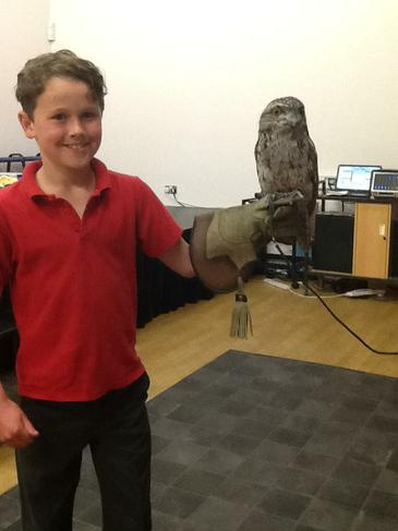 Joe with a Frog-mouth owl.
