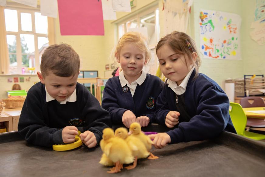 Children looking after ducklings in EYFS