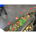 School Council poppies