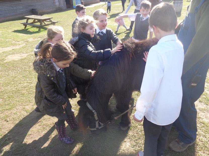 Lily the Shetland pony