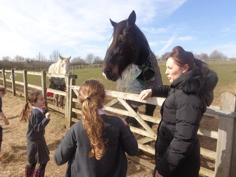 Feeding the lovely Shire horse