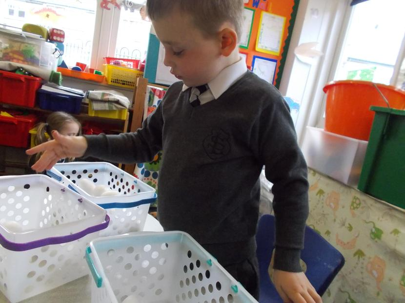 Ollie shares the eggs between three baskets