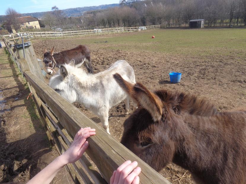 We loved the donkeys!