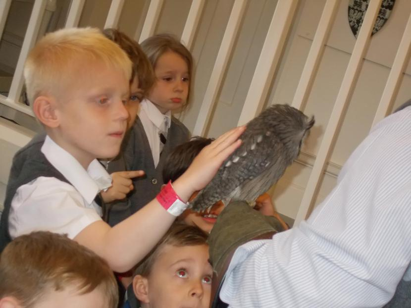 Many of the children stroked Merlin, the owl