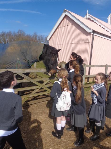 The horses enjoying year 3 and 4's company!