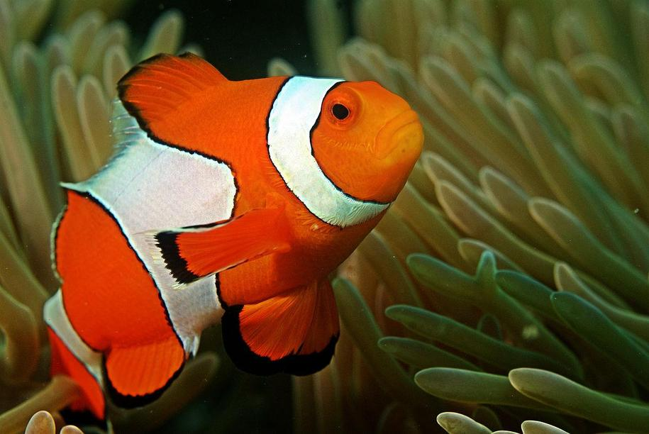 Creative Clownfish