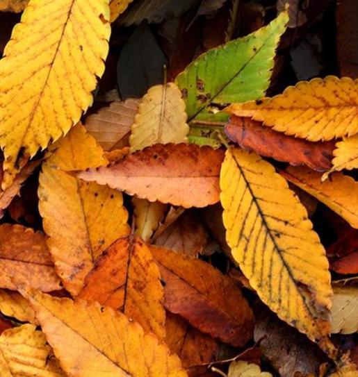 Lovely coloured leaves