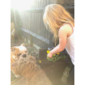 S has been planting flowers with her dogs