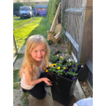 S has been planting flowers