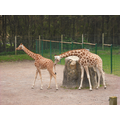 Our trip to Blackpool zoo was great