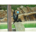 Year 1 watched the sea lion show.