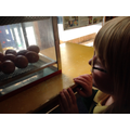 Flo watching the eggs hatch