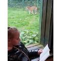E reading at Blackpool Zoo (3)