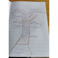 A super positivity tree by Ethan