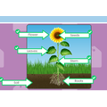 Plant labelling by Ugne