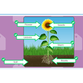 Plant labelling by Gabriela