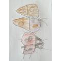 Drawings by Gabriela