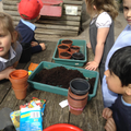 We planted seeds outside.