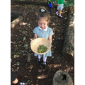 Sep: Collecting acorns to practise our counting