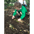 Counting acorns