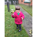 Harvest: Picking apples from the school garden