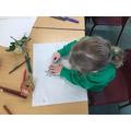 Observational drawing - apples