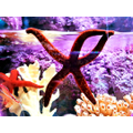 How does a starfish survive in rockpools?