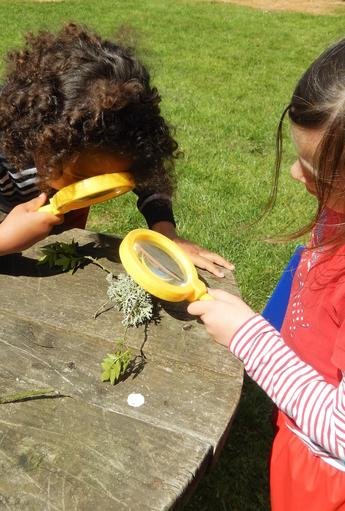 Investigating types of lichen which...