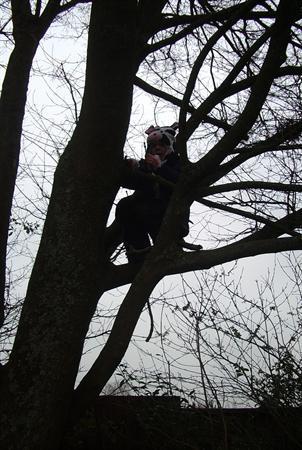 Tree climbing - managing risk & problem solving.