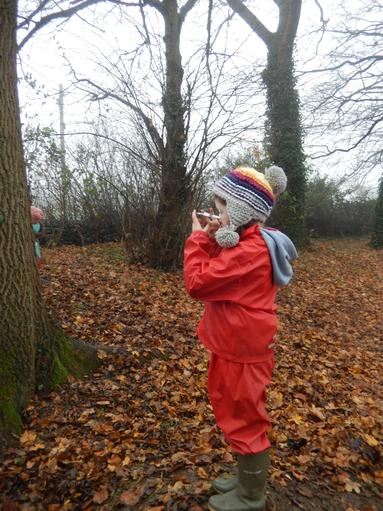Using mirrors to investigate the tree canopy