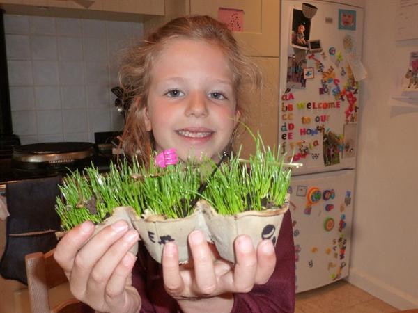 Sowing & growing - funky grassapillars!