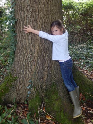 Choosing a tree to adopt & study this term
