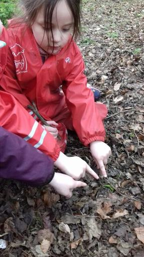 Finding signs of spring under the leaf litter