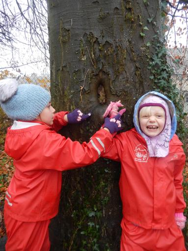 Finding tree faces & guessing how they are feeling