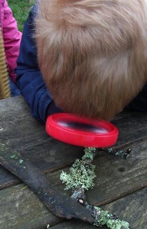 Investigating lichens.
