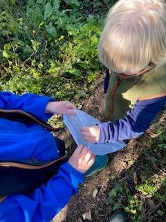 Collecting for a nature tray while on a dog walk