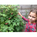 BS: Raspberry Picking